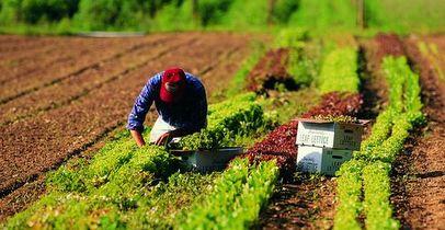 """Lazio, bando """"Investimenti nelle imprese agroalimentari"""""""